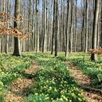 İlkbahar'da Kamp Keyfi Yapın