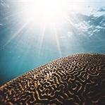 Bağırsaklarımızdaki Bakteriler Beynimizi Etkiliyor