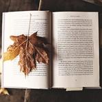 Ekrandaki Yazıyı, Kâğıttan Okuyunca Daha İyi Anlıy