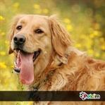 Köpeğe isim koyarken, doğru tercih yapmak!