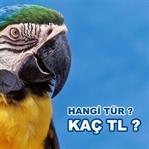 Papağan türleri ve fiyatları ne kadar?
