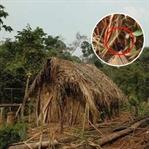 22 Yıl Sonra İlk Kez Görülen Amazon Kabile Üyesi