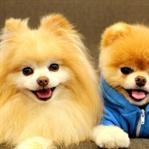 Apartmanda Beslenebilcek Köpekler