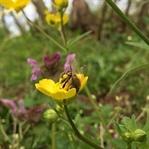 Bizim Arı Neymiş Böyle? Arının Bilinmeyenleri