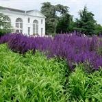 LONDRA – LONDRA'DA PARKLAR II , Kew Gardens