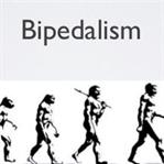 İnsan Evriminde Bir Dönüm Noktası: Bipedalizm