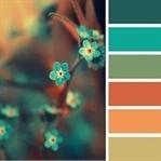 Renk Seçmek