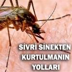 Sivrisineklerden Kurtulma / Sivrisinek Sokması