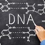 TAGTGCGTGAGTACACA: DNA