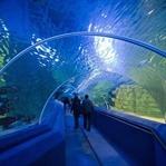 Dünyadaki En Büyük Akvaryumlar
