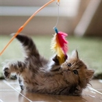 Kediler İçin Oyun Ve Oyuncak Ne Kadar Önemli?