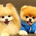 Köpek Hastalıkları Hakkında Bilgiler
