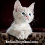 Yavru Kedi Bakımı Nasıl Yapılmalıdır ?