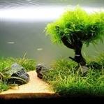 CO2 siz Bitki Akvaryumu Kurulumu