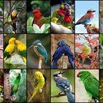 Dünyanın En Harika Kuşları