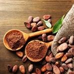 Kakao Yağı Nedir? Kakao Yağının Faydaları