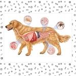 Köpeklerde İç Parazit Nedir ve Nasıl Kurtuluruz?