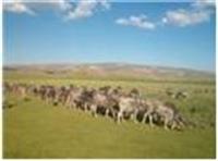 Türkiye de Ve Dünya da Tarım Ve Hayvancılık!