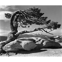 Ansel Adams (20.02.1902 - 22.04.1984)