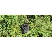 Uganda..Ekvator, Gorilla Takip, Safari Ve Nil Nehr