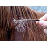Saçlar Hangi Dönemlerde Dökülür?