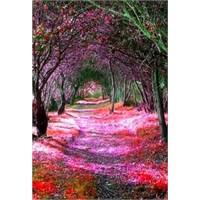 Ağaçtan Tüneller - İi