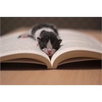 Kedimin Doğum Hikâyesi