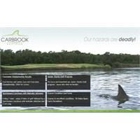 Köpekbalıklarıyla Golf Keyfi