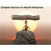 Karinca İle Hz. Süleyman (A.S) Güzel Hikayesi
