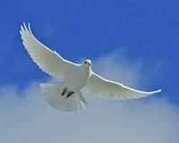 Tokatlı Güvercin e Nasihat