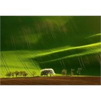 Çarpıcı Yeşil Manzara Fotoğrafları