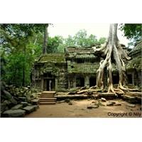 Rüya Şehir: Angkor