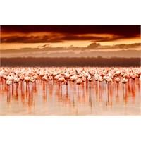 Nakuru Gölü, Kenya