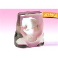 Doğmamış Bebeğinizin 3d Modeli