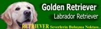 Golden Retriever Köpekleri