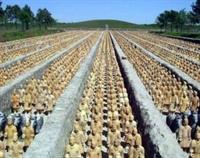 Qin Shihuang Mezarlığ