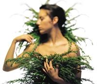 Doğal Saç Bakımında Kullanılan Bitkiler