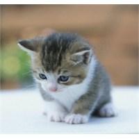Aç Kalmış Bir Kedicik