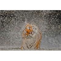National Geographic 2012 Yılın En İyi Fotoğrafları