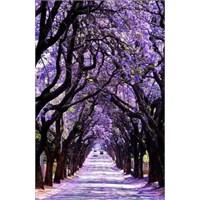 Ağaçtan Tüneller