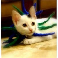 Bir Kedim Var Kimselere Benzemez