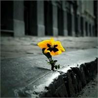 Yaşamak İçin Savaşmak …