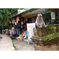 Bir Maymunun Günlüğü