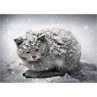 Bu Soğuk Havalarda Sorumluluklarımız Var, Onları U