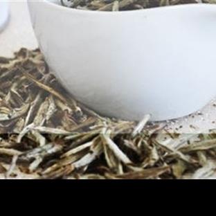 Beyaz Çay ve Faydaları