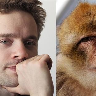 İnsan ve Maymun Beyni Arasında Şaşırtıcı Benzerlik