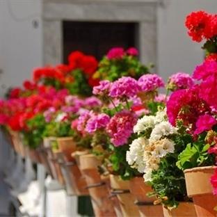 Evde Bitki Yetiştirmek İçin Sahip Olmanız Gereken