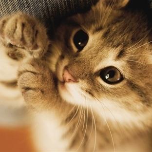 Kedilerin Bilinmeyen Özellikleri