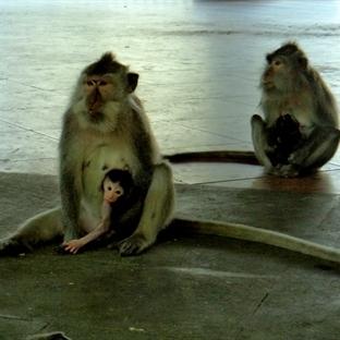 Maymun Ormanı, The Blanco Renaissance Museum, Keca