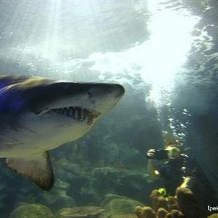 Turkuazoo'da Köpekbalıkları ile Dalış!